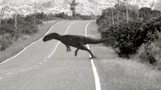 Dinosaur 6